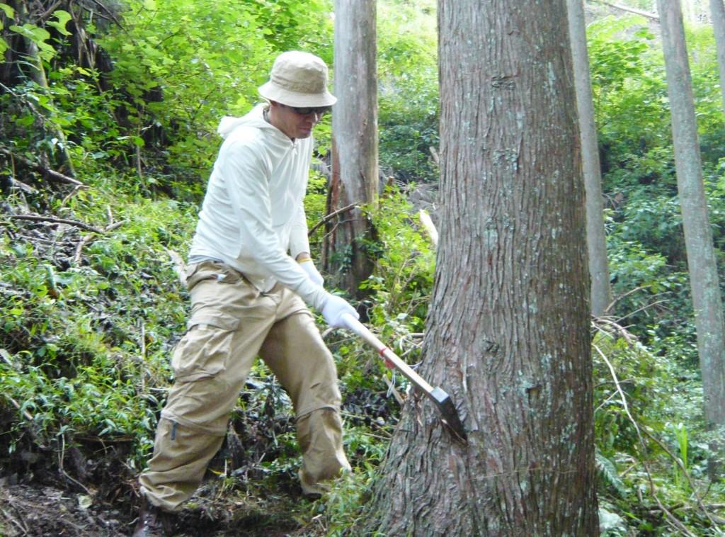 伐採ツアー T様の木の家を伐採