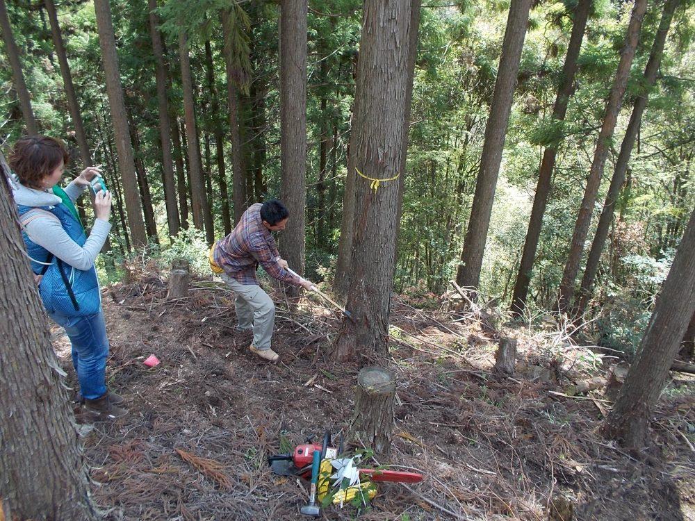 大阪で大自然の木を使って建てるならソーラーコム